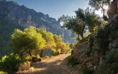 Vandring på Mallorca 21.4. – 28.4. 2021