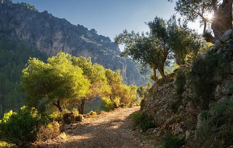Vandring på Mallorca 19.5. – 26.5. 2021