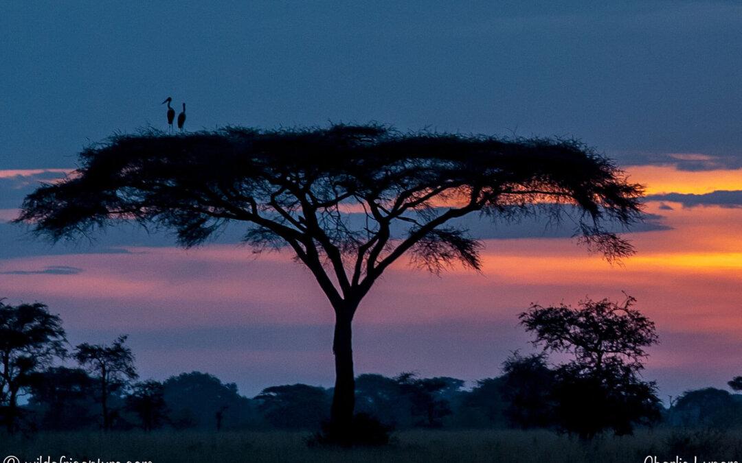 I Jakob Ejersbos fodspor, safari og Zanzibar 25.10-8.11. 2020