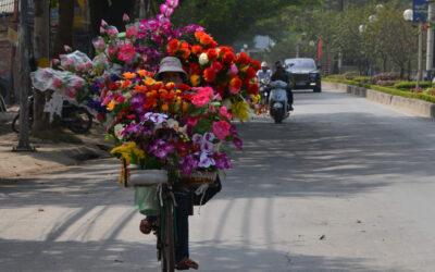 Vietnam set indefra 14.11. – 27.11. 2020